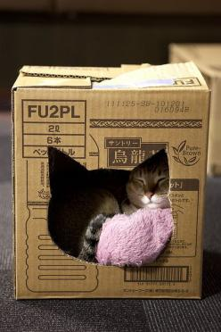 Basic and cute!: Cats, Idea, Pet, Boxes, Cat House, Animal
