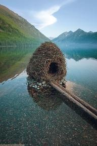 Be afraid of the bird that built this. Very afraid: Nature, Beaver House, Beavers, Nests, Places, Homes