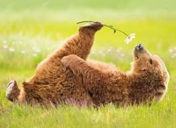 bear with a flower: Smell, Time, Animals, Nature, Bears, Beautiful, Creatures, Flowers, Photo