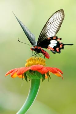 ~beautiful butterflies~: Beautiful Butterflies, Orange Flower, Butterflies Moths Dragonflies, Butterflies Mariposas, Mariposas Butterflyes, Butterflies Moths Insects, Animal