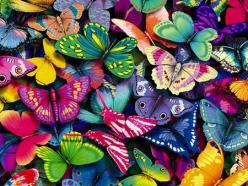 Beautiful Butterflies: Colour, Beautiful Butterflies, Butterfly, Colorful, Colors, Art, Rainbow, Animal