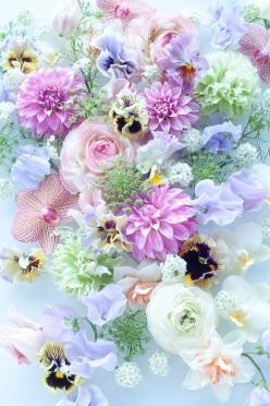 : Beautiful Flower, Spring Flower, Color, Pastel Flower, Pretty Pastel, Flowers, Garden, Flower
