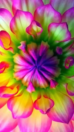 Beautiful Flower- would love to do an ombre with these | http://beautiful-flowers-collections.lemoncoin.org: Colour, Dahlias, Flowers Plants, Beautiful Flowers, Bloom, Garden, Flower
