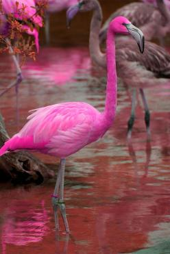 Beautiful Pink Bird: Animals, Pink Flamingos, Color, Pink Birds, Beautiful Birds, Beautiful Pink