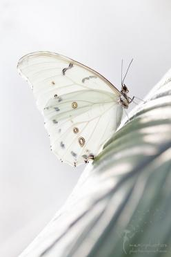 Beautiful wildlife photography ~ white butterfly: Beautiful Butterflies, Butterfly, Nature, Flutterby, White Butterfly, Animal
