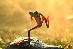 Because sometimes you just need a dancing frog to make you smile  ;): Animals, Dancing Frog, Funny Stuff, Baby, Frogs, Dance, Photo