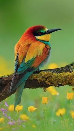 Bee-eater. I think I would die of happiness if I saw this at my feeder!: Colorful Birds, Beautiful Animal, Beautiful Colors, Little Bird, Beautiful Birds, Animals Birds, Bee Feeder