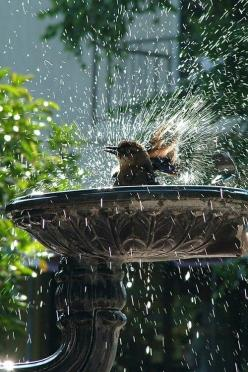 bird bath: Animals, Nature, Birdbaths, Bird Baths, Bathtime, Birds, Garden, Bath Time