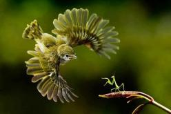 bird vs praying mantis: Photos, Amazing, Animals, Nature, Beautiful, Birds, Praying Mantis, Photography