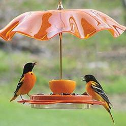 Birdfeeder with a pretty glass umbrella (that just happens to match the birds' coloring!): Bird Feeders, Birdhouse, Bird Houses, Birds, Animal