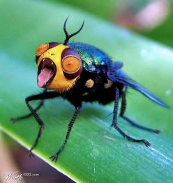 bizarre  Don't you love the little tongue?: Creature, Insects And Bugs, Big Mouth, Bizarre Photoshopped, Bizarre Bug, Bizarre Insect, Animal