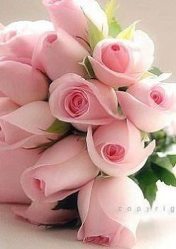 Blooms ❤️ for valentines day or wedding bouquet http://weddingmusicproject.bandcamp.com/album/bridal-chorus-variations: Pink Roses, Beautiful Roses, Pastel Pink, Tea Rose, Flowers Douceur, Beautiful Flowers, Roses Garden