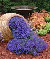 Blue annual lobelia is so easy to grow. It likes to be watered everyday. Its easy to grow from seed but faster to just go ahead and buy a flat of bedding plants.It goes all summer !: Container Garden, Garden Ideas, Can, Blue Lobelia, Front Yard, Flowers G