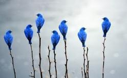 Blue birds are such a pretty sight. This is fantastic, want this pic hanging on my wall.: Photos, Bluebirds, Animals, Nature, Color, Beautiful Birds, Blue Birds, Photography