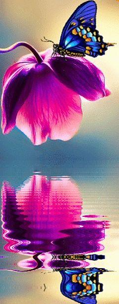 Blue butterfly on raspberry pink flower and their reflection.: Beautiful Butterflies, Pink Flower, Blue Butterfly, Color, Beautiful Reflection, Purple Flower