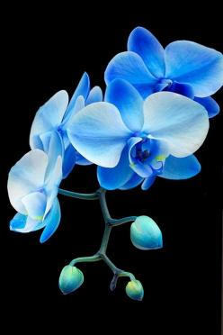 Blue orchids~ Flowers can feel your energy- one time i cried heavily for hours when my dog died~ the orchid in my living room slowly lost its petals one by one during the hours I was crying until the stem was bare~ Also, on the flip side flowers can liven