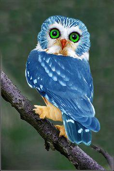 blue owl. (pinned by Kidherostories.com- personalized books for kids with their photos and name.): Beautiful Blue, Birds Owls, Buho Real, Blue Owls, Beautiful Birds, Animals Birds, Blueowl
