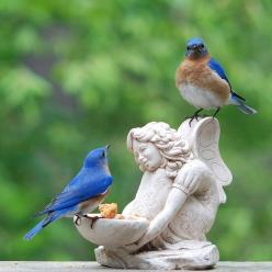 Bluebirds & charming feeder: Angel, Bluebirds, Animals, Nature, Beautiful Birds, Blue Birds, Garden