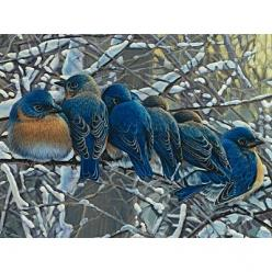 Bluebirds: Birds Bluebird, Bluebirds Beautiful, Bluebirds Painting, Winter Bluebirds, Winter Birds, Blue Birds, Beautiful Bluebirds