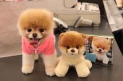 boo! even though it's just a pomeranian shaved differently, it is one of the cutest dogs out there!: Animals, Real Boo, Boo Dog, Cutest Dogs, Pets, Puppy, Stand Up, Stuffed Animal, Pomeranian