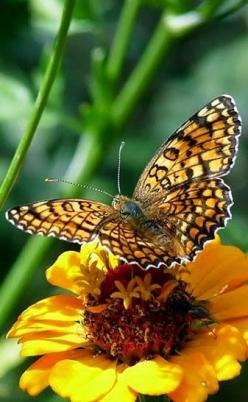 Borboletas com flores: Beautiful Butterflies, Yellow Butterfly, Flutterby, Beautiful Nature, Flower