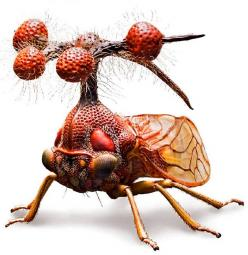 Brazilian Treehopper, or Bocydium globulare - a real living insect, which only pretends to be an alien helicopter:: Brazilian Treehopper, Alien Helicopter, Real Living, Bugs, Creature, Insects, Living Insect, Animal