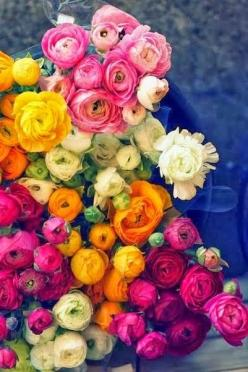 Brilliantly bright boquet.: Rose, Ranunculus, Color, Wedding, Beautiful Flowers, Garden, Floral, Favorite Flower