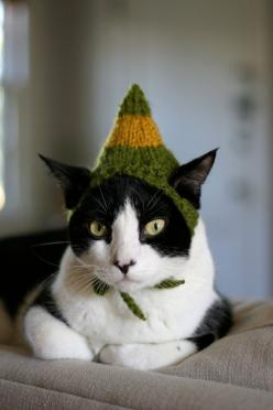 Buddy the Elf Cat Hat by scooterKnits..I don't usually go for hats on cats,,,but this is a BUDDY THE ELF hat !: Cats, Hats, I Ll Knit, Elf Hat, Kitty, Buddy The Elf, Animal