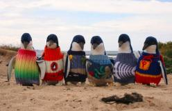 But they always need more. You can contribute a jumper by downloading a pattern here. Get as creative as you like! | These Tiny Penguins Wearing Jumpers Will Make Your Heart Burst: Australia S Oldest, Sweaters, Animals, Oil Spill, Oldest Man, Oilspill, Pe