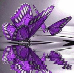 Butterflies  http://www.bareindulgence.net: Beautiful Butterflies, Purple Butterflies, Color, Purple Butterfly, Flutterby, Purple Passion, Things Purple
