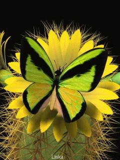 Butterfly: Beautiful Butterflies, Butterfly, Animals, Beauty, Birds, Flower