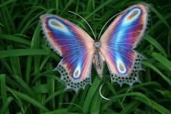 Butterfly: Beautiful Butterflies, Butterfly, Animals, Nature, Color