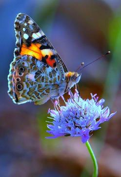 Butterfly: Beautiful Butterflies, Nature, Flutterby, Moth, Flower, Animal