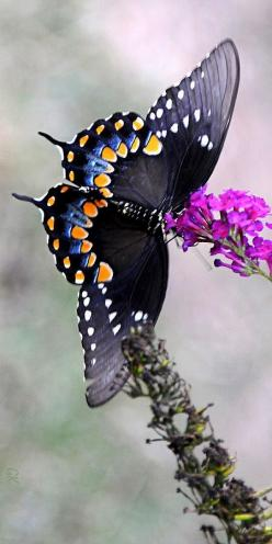 butterfly: Birds Butterflies Oceanography, Beautiful Butterflies, Winged Beauty, Birds Houses Baths Butterflies, Beauty Splendor, Butterflys 3, Dragonflys Fireflys Butterflys