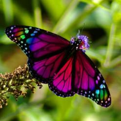 Butterfly #butterfly: Beautiful Butterflies, Animals, Nature, Color, Flutterby
