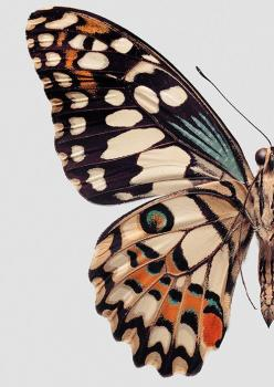 Butterfly close-up: Beautiful Butterflies, Colour, Butterfly, Pattern, Butterfly Wings, Color Palette, Animal