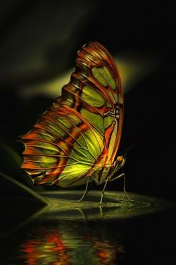 Butterfly......hip hop instrumentals updated daily => http://www.beatzbylekz.ca: Beautiful Butterflies, Butterfly, Animals, Nature, Color, Flutterby