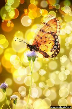 Butterfly~Just passed 4 months since you've been gone. Some days are so hard. I miss you so much. It hurts that your life was cut short . . .so many wishes and dreams gone with you. I love you Kelly . . .: Bokeh Photography, Beautiful Butterflies, Col