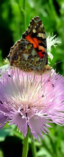Butterfly on flower. - Cute animals world: Beautiful Butterflies, Butterflies Dragonflies, Flutterby, Cute Animals, Flower