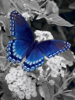 Butterfly Photography - with a splash of color: Beautiful Butterflies, Blue Butterfly, Color, Flutterby, Butterflies Moth, Flower, Animal