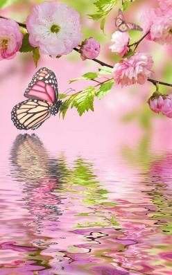 Butterfly reflection ✿⊱╮: Butterfly Pictures, Beautiful Butterflies, Butterfly Photos, Pink, Butterflies Flowers, Butterflys Cool, Flowers And Butterflies, Butterfly Papillon Mariposa