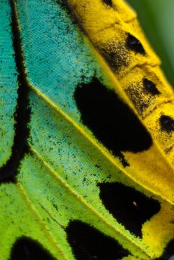 butterfly wing.: Photos, Butterflies, Pattern, Nature, Texture, Colors, Butterfly Wings, Close Up