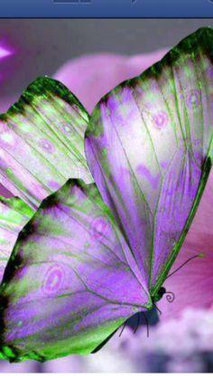 Butterfly Wings: Butterflies Dragonflies, Butterfly, Color, Purple Butterfly, Butterfly Wings