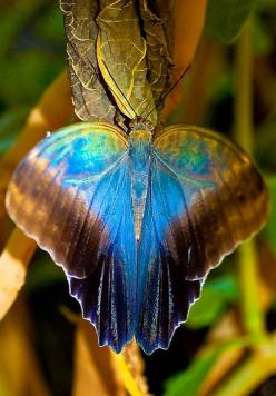 Butterfly with Gorgeous Colors: Beautiful Butterflies, Color, Animal