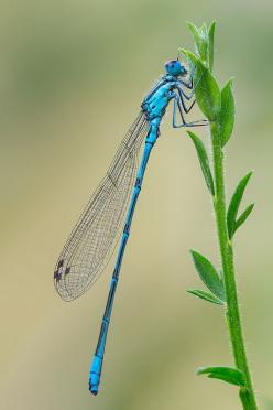 ... by Grzegorz Skowronski (Amtrak)**: Dragonflies Damselflies, Butterflies Birds Dragonflies, Damsefly Dragonfly, Dragonfly S Magically, Birds Dragonflies More, Dragonfly Yusufçuk, Dragonflies ஐƸ̵̡Ӝ̵̨̄Ʒஐ