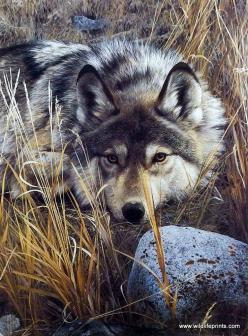 By Wildlife Artist Carl Brenders ... Unframed Wolf Print One to One | WildlifePrints.com...: Brenders Unframed, Wolves Foxes, Wolf Love Beautiful, Artist Carl Brenders, Unframed Wolf, Belgiumart Carlbrenders, Carl Brenders Artist