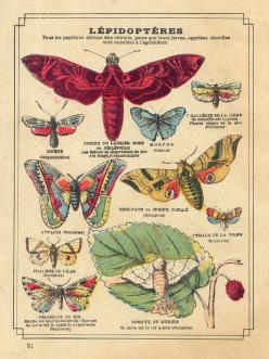 cahier lépidoptères b by pilllpat (agence eureka), via Flickr: Butterfly, Idea, Graphic, Butterflies, Book Illustrations Vintage, Photo, Drawing