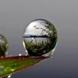 Capture the HD photos with best camera. Panasonic offers ultimate range of HD and professional camera that helps you to enjoy ultimate photography. http://www.panasonic.com/in/consumer/cameras-camcoders/camera.html: Photos, Nature, Beautiful, Dew Drop, Ra