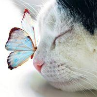 cat & butterfly: Cats, Animals, Sweet, Butterfly Kisses, Butterflies, Pet, Beautiful, Kitty, Photo