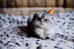 cat: Cats, Happy Birthday, Animals, Party'S, Party Hats, Birthday Cat, Birthdays, Parties, Kitty
